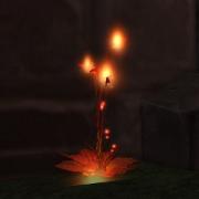 Fire Poppy